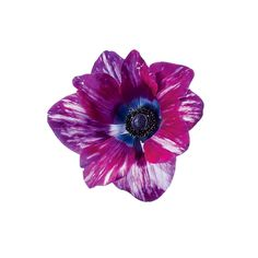 Brides.com: A Glossary of Wedding Flowers by Color. Anemone. This modern-looking flower also comes in white, blue, red, plum, and blush. FYI: The white anemone comes with either a green or black eye.  Browse more anemone wedding flower ideas.