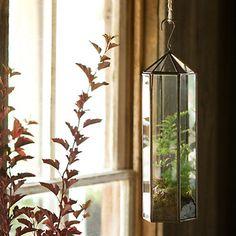 Tall Hanging Atrium Terrarium
