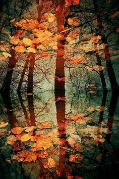 water reflections, fall leaves, season, tree, autumn leaves, color, fall harvest, autumn falls, autumn photography