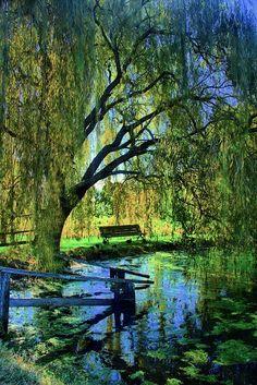 The pond at Eltham, Melbourne, Australia