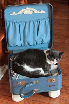 Vintage suitcase for a cat bed - Add a down filled pillow (www.oldeuropeduvet.com), fabric (www.tonicliving.com) legs and a little detail = Happy Cat :)