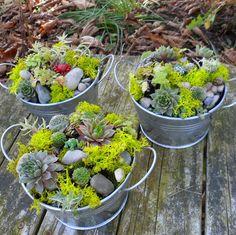 Succulent Dish Garden with a garden creature by sosucculent