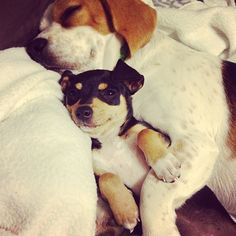 This puppy who loves being the little spoon.