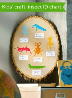 Kids craft - make an easy insect ID chart