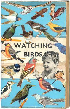vintage books, bird book, michell thompson, bird watch, art, book covers, watch bird, birds, book cover design