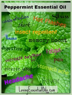 Peppermint Essential Oil Uses | Loving Essential Oils - Sharing the Power