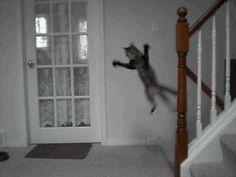 crazy, flying cat