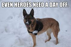 """Lucca, the military working dog who lost her leg while on morning patrol in Afghanistan, is currently enjoying her retirement in Finland. She will be riding our """"Canines with Courage"""" Rose Parade float, which is honoring military working dogs throughout the country."""