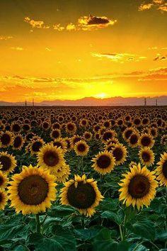 Sunny skies ahead. #MKSpring #AllAccessKors
