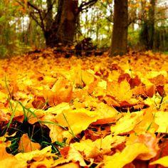 Health Tips For Fall | giverecipe.com