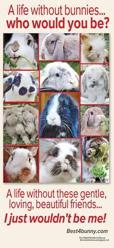A life without bunnies... Who would you be? A life without these gentle, loving, beautiful friends... I just wouldn't be me!