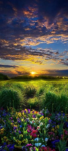 A beautiful Wisconsin meadow at sunset.