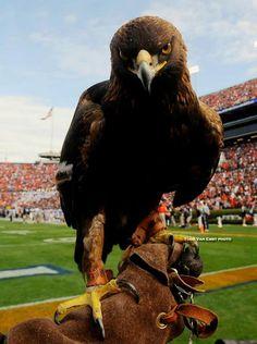 WAR EAGLE!  Auburn University. One of my FAVORITE places on earth!  Auburn football games at Jordan Hare Stadium!!