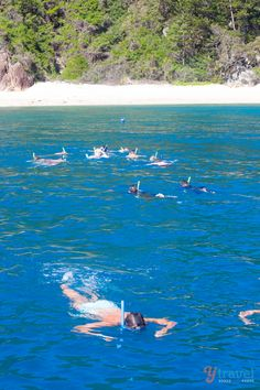 Snorkeling in the Whitsunday Islands, Queensland, Australia