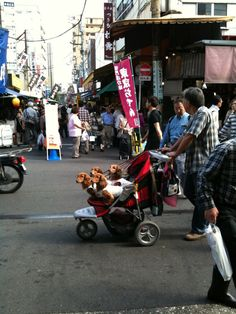 Ha! Doxies in a stroller. Too cute!