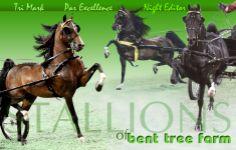 farm stallion, bent tree, tree farm