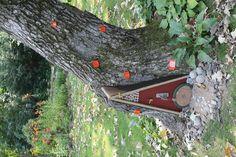 Hobbit Holes - Garden Junk Forum - GardenWeb
