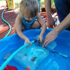DIY Kids Activities ~ Excavating Dinosaurs From Ice excav dinosaur, hot summer days, dinosaur activities, language activities, ice blocks, summer activities, kids dinosaurs activities, babi, summer fun