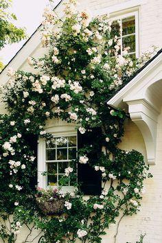 climb rose, cottag, white roses, window, dream, climbing roses, hous, garden, flower