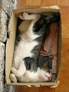 Cats and boxes...love!