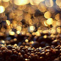 the beach glitters at dawn