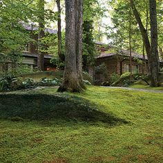 Planting a Moss Lawn