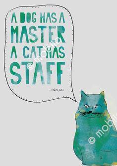 #cute #cats #funny