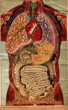 Morbid Anatomy