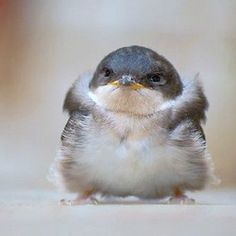 Here's a bird with a nice sweater and an attitude.