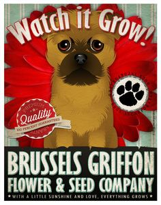Dogs and Flowers Art Print Brussels Griffon by DogsIncorporated