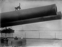 cats, queen elizabeth, barrels, queens, 1915