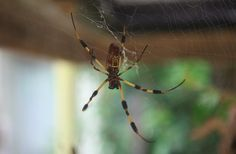 """Homemade """"Spider Spray"""" to the Rescue!"""