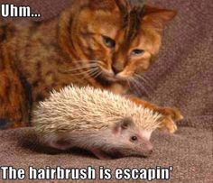 Funny cat pictures of the day