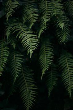 ferns, captured by Sonja Lyon Photography