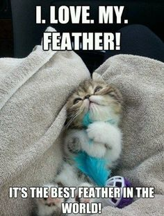 Feathers.  Kittens.  Ultimate Cuteness.