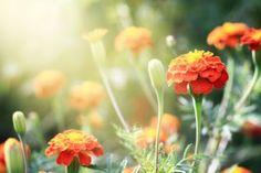 Organic Weed Control | Stretcher.com - Keeping weeds at bay the natural way