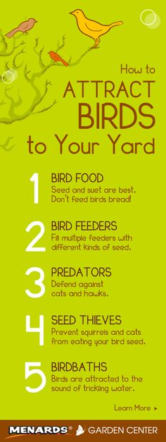 Attract birds to your yard with these 5 simple tips. Read full article: http://www.menards.com/main/c-19062.htm?utm_source=pinterest&utm_medium=social&utm_campaign=gardencenter&utm_content=attract-birds&cm_mmc=pinterest-_-social-_-gardencenter-_-attract-birds