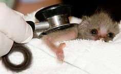 Tiny monkey wishes you warmed that up first.