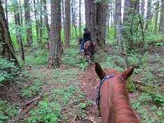 Try horseback riding through the Douglas Tree forest at Dream Ridge Stables in Oregon City. Photo courtesy of Travel Portland