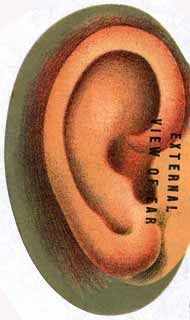 Ears - Hearing - Preventing Hearing Loss