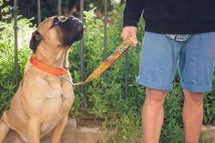 Fito with wild combination! Solid Orange & Figueres leash! SHOP NOW http://brottdog.com/es/textura/87-orange-figueres.html