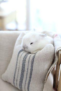 Tiny Marshmallow