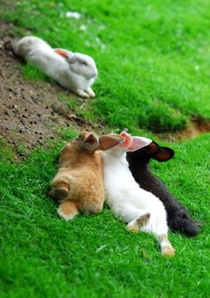 bunnies chilling.