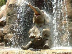 Happy elephant lol