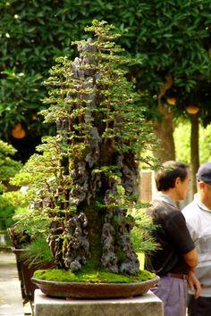 What a Gorgeous Bonsai Forest.