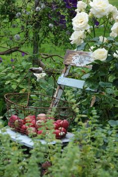 apple basket and roses