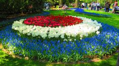 I love flowers.. especially tulips so you know I visit this site a lot!