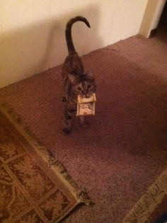 This is the kind of cat I need . . . one who finds money and brings it back to me!