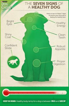 7 Signs of a Healthy Dog