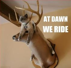 funny animals, dawn, silly cats, seat, funny pictures, funny cats, funni, deer heads, kitty